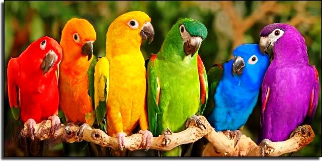 Kumpulan Gambar Burung Peliharaan Cantik