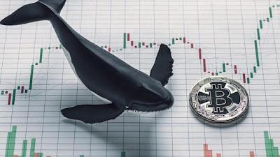 Количество BTC на адресах «китов» впервые достигло 9.23 млн