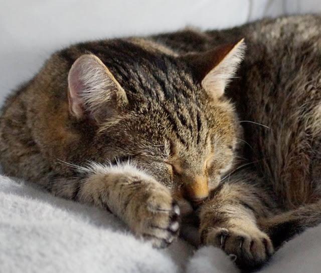 Wenn geliebte Katzen alt werden: Unser alter Kater und das Recht der Tiere auf's Altsein. Auch wenn Tiere alt werden, dürfen sie es zu Hause als Senior gut haben und ihr Alter genießen, solange sie nicht leiden.