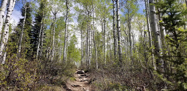 aspens, steamboat springs, co, colorado, hike, hiking