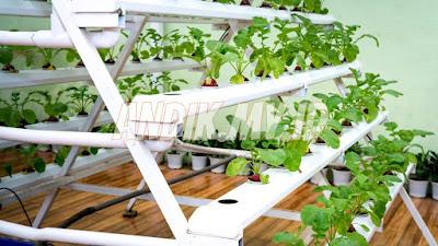 gerakan berkebun, berkebun, hidroponik, sayur hidroponik