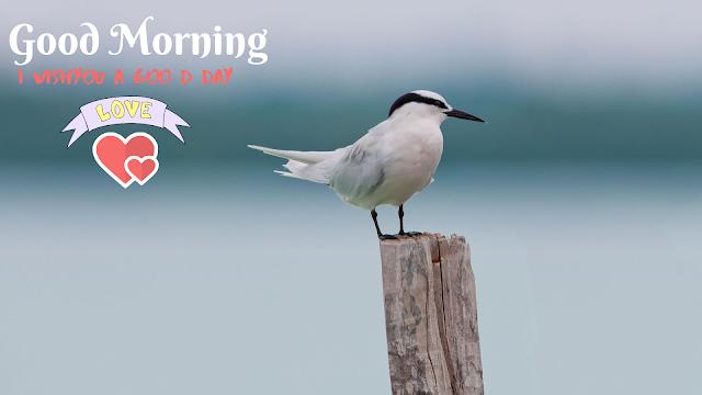 Fine Bird Good Morning Images