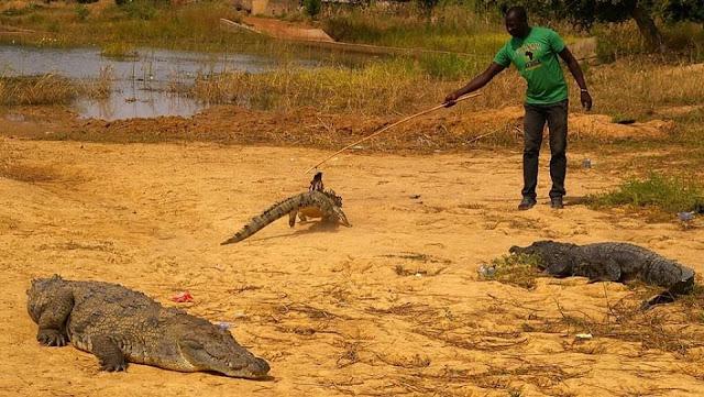 Người dân ở ngôi làng kì lạ sống cùng hàng trăm con cá sấu 3