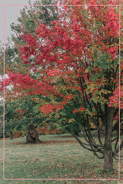 Autumn photography at petworth park