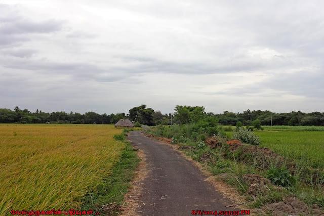 Paddy field Veyialore
