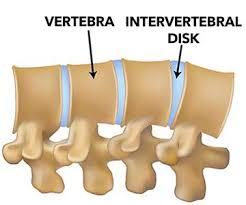 disco vertebral de cães