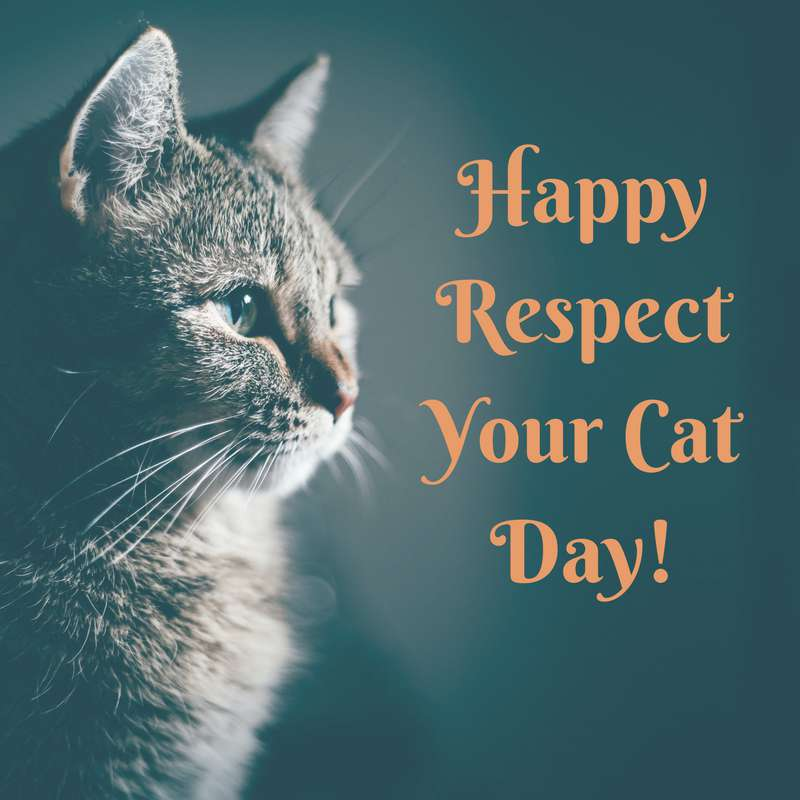 Respect Your Cat Day Wishes Photos