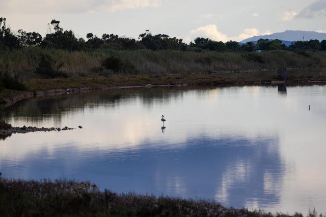 Parco naturale Molentargius-Saline-Cagliari