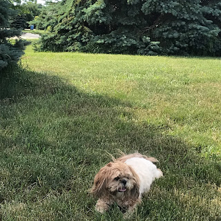 Weekly Digest | Week Ending June 19, 2021 | Our family enjoying a bit of shade after returning home from our walk! | Nature's INKspirations by Angie McKenzie