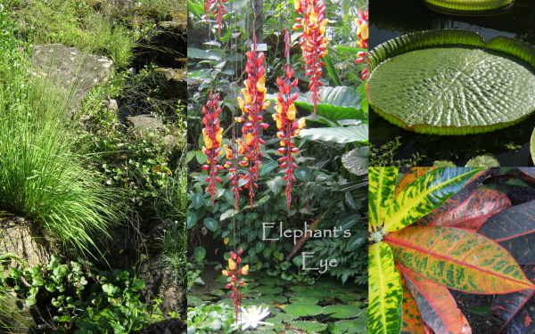Cliff and tropical plants. Amazon lily and Croton