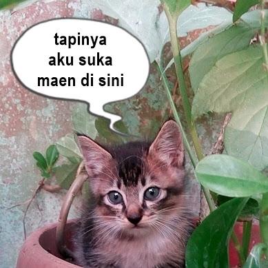 Mak Jabrik dan Bayi Kucing Baru