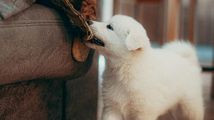 puppy-socialization-classes