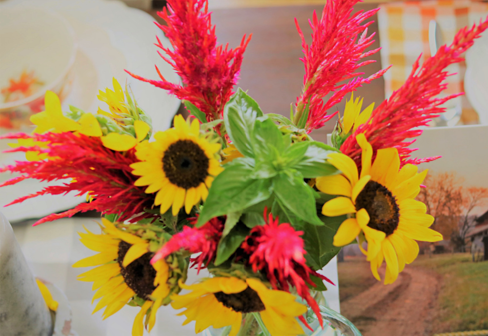 celosia-sunflowers-gardening-growing-tips-athomewithjemma
