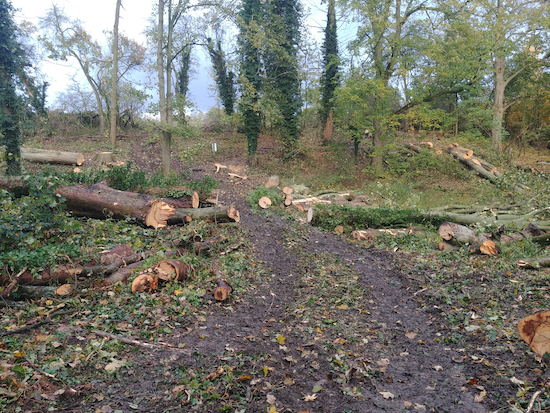 Tree felling underway in Gobions Wood