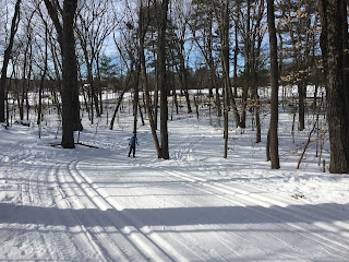 Cross County ski trails in wooded area with fields beyond.