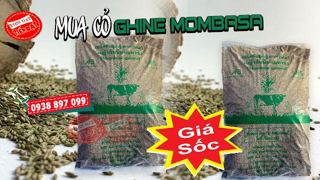 Bảng giá bán hạt giống cỏ Ghine Mombasa