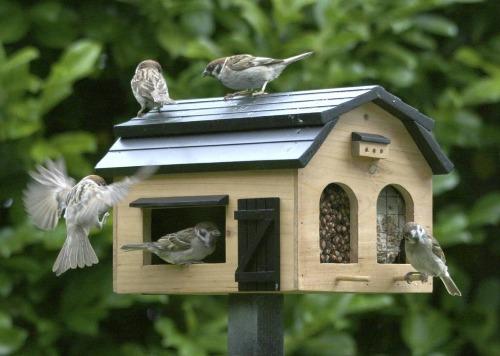beste voederhuisje vogels