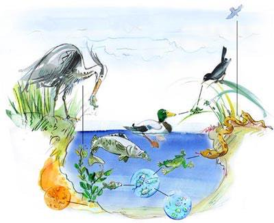 Relationships between organisms and ecosystems