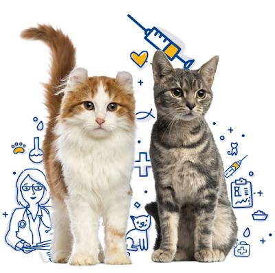 Buku Vaksin Kucing
