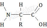 Rumus struktur asam amino