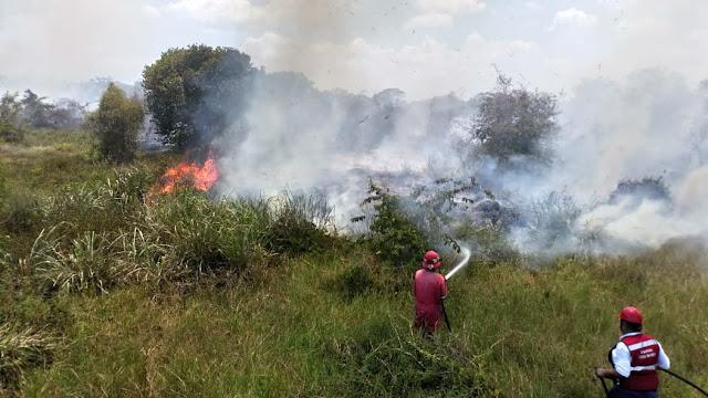 Incendios de pastizales han sido ocasionados por descuido de la población