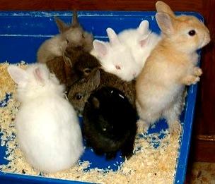 Foto de conejos pequeños