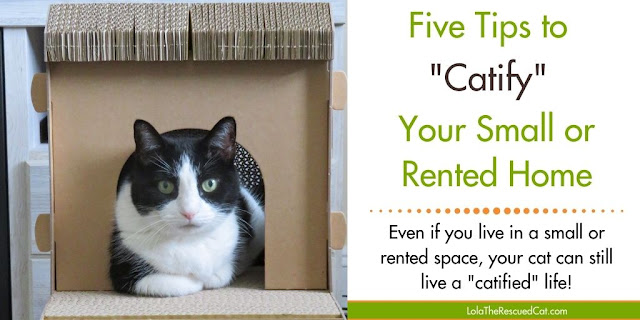 catify small spaces