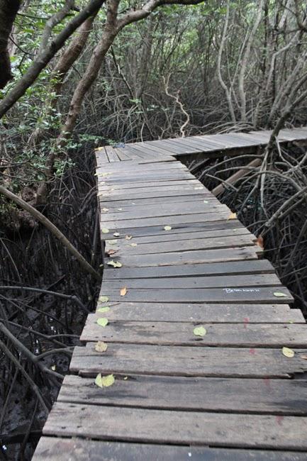 El camino de madera