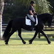 My Horse Hates Dressage