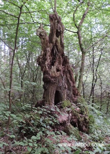 Fairy Castle Tree