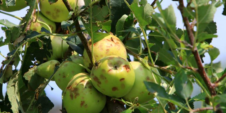 Αποζημιώσεις 131.000 ευρώ για τους αγρότες στην Ξάνθη