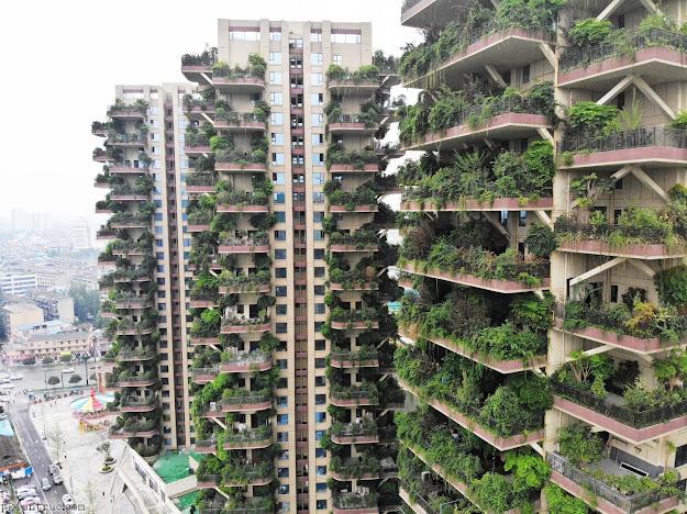 ban công của khu chung cư mệnh danh là vertical forest