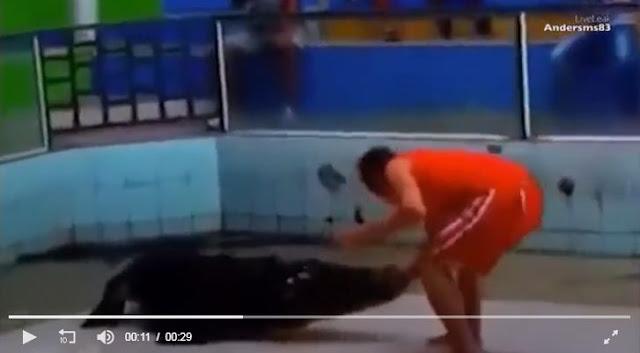 Video: Đang biểu diễn, cá sấu bất ngờ ngoạm tay rồi quật ngã người đàn ông ngay trên sân khấu