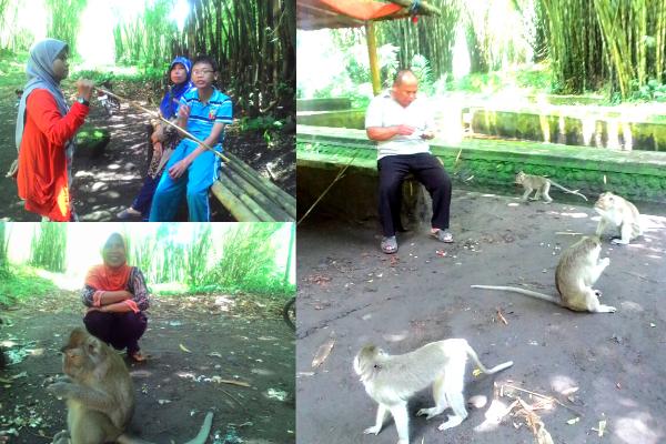 kera-hutan-bambu-lumajang