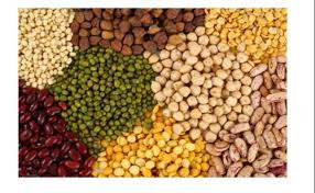 The Millers of Indore buying pulses directly from farmers.