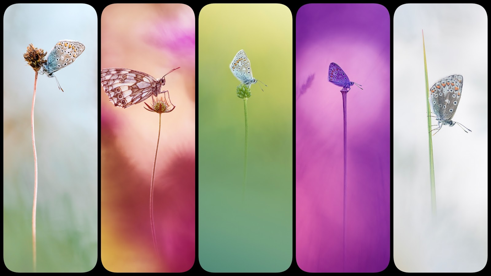 Beautiful Butterfly wallpapers for phone