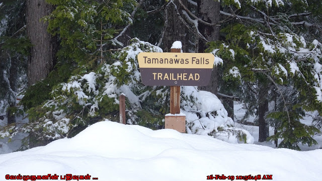 Tamanawas Falls Trail-head