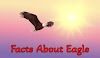 100+ Unbelievable Facts About Eagle In Hindi