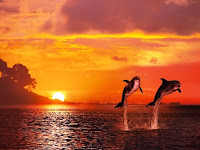 Berburu Lumba – lumba di Objek Wisata Pantai Lovina Bali