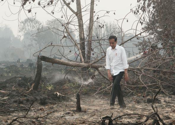 Jokowi Sebut Korporasi dan Warga Bakar Hutan untuk Buka Lahan