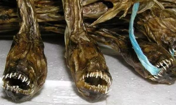warasubo, green eel goby