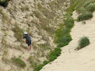 Botanizing in the crevices of the dunes of Cape Kiwanda.