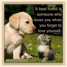 cat quotes a best friend is someone who loves you when you forget to love yourself