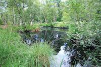 Mare à Dagneau, Forêt de Fontainebleau