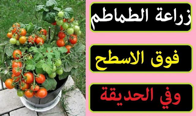 """"""""""",""""زراعة الطماطم"""","""""""","""""""","""""""","""""""","""""""","""""""","""""""" """""""",""""زراعة الطماطم بالتنقيط"""","""""""","""""""","""""""","""""""","""""""","""""""","""""""" """""""",""""زراعة الطماطم في الصيف"""","""""""","""""""","""""""","""""""","""""""","""""""","""""""" """""""",""""زراعة الطماطم في البيت"""","""""""","""""""","""""""","""""""","""""""","""""""","""""""" """""""",""""زراعة الطماطم من البذور"""","""""""","""""""","""""""","""""""","""""""","""""""","""""""" """""""",""""زراعة الطماطم في شهر يونيو"""","""""""","""""""","""""""","""""""","""""""","""""""","""""""" """""""",""""زراعة الطماطم في أصيص"""","""""""","""""""","""""""","""""""","""""""","""""""","""""""" """""""",""""زراعة الطماطم فى مصر"""","""""""","""""""","""""""","""""""","""""""","""""""","""""""" """""""",""""زراعة الطماطم في البلكونة"""","""""""","""""""","""""""","""""""","""""""","""""""","""""""" """""""",""""زراعة الطماطم الشيري"""","""""""","""""""","""""""","""""""","""""""","""""""","""""""" """""""",""""زراعة الطماطم المتسلقة"""","""""""","""""""","""""""","""""""","""""""","""""""","""""""" """""""",""""زراعة الطماطم المعلقة"""","""""""","""""""","""""""","""""""","""""""","""""""","""""""" """""""",""""زراعة الطماطم السلك"""","""""""","""""""","""""""","""""""","""""""","""""""","""""""" """""""",""""زراعة الطماطم الشيري من البذور"""","""""""","""""""","""""""","""""""","""""""","""""""","""""""" """""""",""""زراعة الطماطم العروة الصيفية"""","""""""","""""""","""""""","""""""","""""""","""""""","""""""" """""""",""""زراعة الطماطم الشتوية"""","""""""","""""""","""""""","""""""","""""""","""""""","""""""" """""""",""""زراعة الطماطم الشيرى فى المنزل"""","""""""","""""""","""""""","""""""","""""""","""""""","""""""" """""""",""""زراعة الطماطم هيدروبونيك"""","""""""","""""""","""""""","""""""","""""""","""""""","""""""" """""""",""""زراعة الطماطم بالمنزل"""","""""""","""""""","""""""","""""""","""""""","""""""","""""""" """""""",""""زراعة الطماطم مائيا"""","""""""","""""""","""""""","""""""","""""""","""""""","""""""" """""""",""""زراعة الطماطم في المنزل"""","""""""","""""""","""""""","""""""","""""""","""""""","""""""" """""""",""""زراعة الطماطم في المنام"""","""""""","""""""","""""""","""""""","""""""","""""""","""""""" """""""",""""زراعة الطماطم ا"""","""""""","""""""","""""""","""""""","""""""","""""""","""""""" """""""",""""زراعة الطماطم pdf"""","""""""","""""""","""""""","""""""","""""""","""""""","""""""" """""""",""""زراعة الطماطم ppt"""","""""""","""""""","""""""","""""""","""""""","""""""","""""""" """""""",""""زراعة الطماطم الفصلية pdf"""","""""""","""""""","""""""","""""""","""""""","""""""","""""""" """""""",""""دليل زراعة الطماطم pdf"""","""""""","""""""","""""""","""""""","""""""","""""""","""""""" """""""",""""زراعة الطماطم في تونس pdf"""","""""""","""""""","""""""","""""""","""""""","""""""","""""""" """""""",""""زراعة الطماطم في السودان pdf"""","""""""","""""""","""""""","""""""","""""""","""""""","""""""" """""""",""""زراعة الطماطم في الجزائر pdf"""","""""""","""""""","""""""","""""""","""""""","""""""","""""""" """""""",""""زراعة الطماطم بدون تربة pdf"""","""""""","""""""","""""""","""""""","""""""","""""""","""""""" """""""",""""زراعة الطماطم wikihow"""","""""""","""""""","""""""","""""""","""""""","""""""","""""""" """""""",""""زراعة الطماطم تنقيط"""","""""""","""""""","""""""","""""""","""""""","""""""","""""""" """""""",""""طرق زراعة الطماطم بالتنقيط"""","""""""","""""""","""""""","""""""","""""""","""""""","""""""" """""""",""""طريقة زراعة الطماطم بالتنقيط"""","""""""","""""""","""""""","""""""","""""""","""""""","""""""""""
