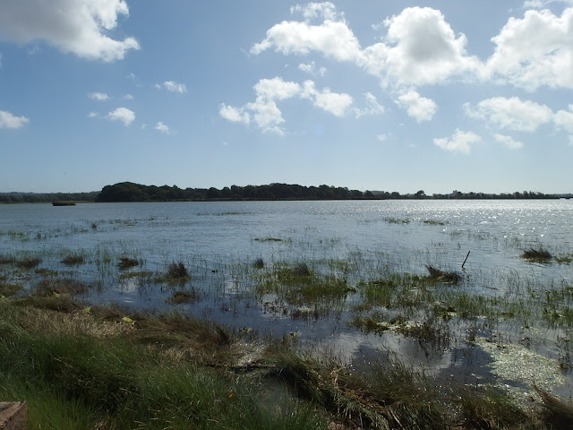 A watery scene from Holes Bay, Poole Harbour
