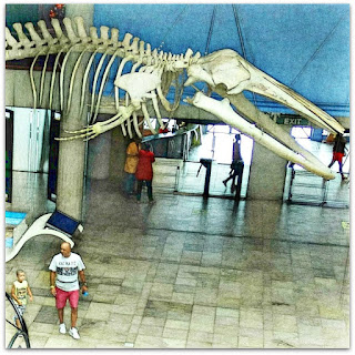 Espaço dos Mamíferos Aquáticos - Museu de Ciência e Tecnologia da PUCRS