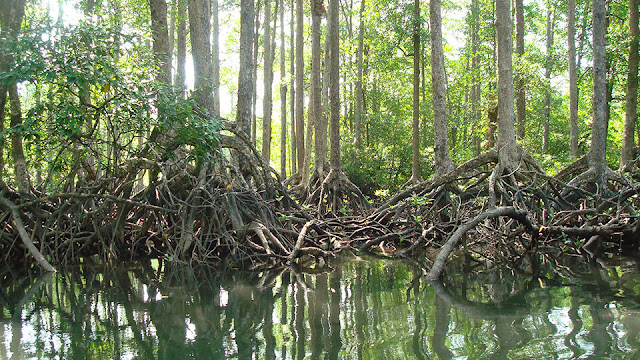 More than 60% of Myanmar's mangroves has been deforested in the last 20 years