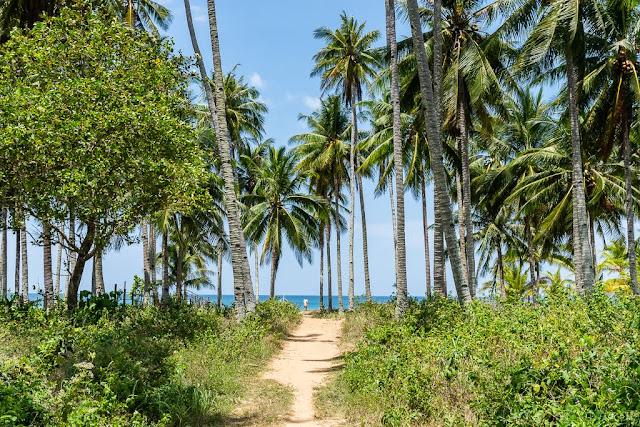 Dagmay-beach-Palawan-Philippines