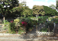 The garden plots, Foster Community Garden - Honolulu, HI